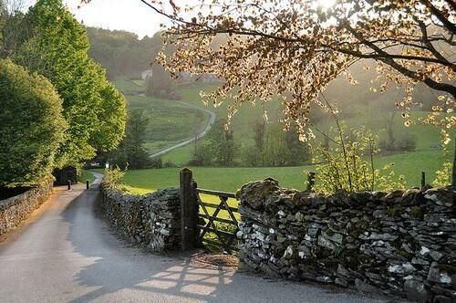 Country Lane Exploration